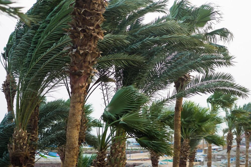 Palm Trees in Hurricane