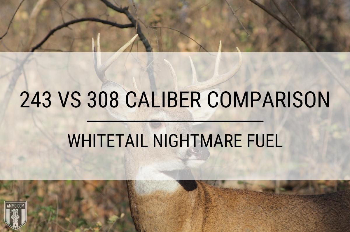 243 vs 308 caliber comparison